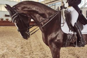 Ausbildung fuer das Pferd